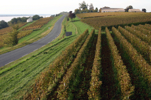 Vineyards in the Blaye Bourg region, Bordeaux, France