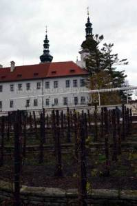 Monastic vines growing in the middle of Prague.