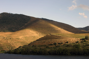 Douro vineyards, Oporto, Portugal