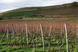 Vineyards around the Kaiserstuhl, Baden, Germany