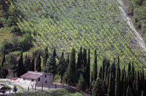 Siena, Chianti, Italy