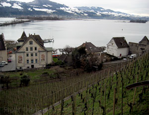 Vineyards on the castle slopes, Rapperswil, Switzerland