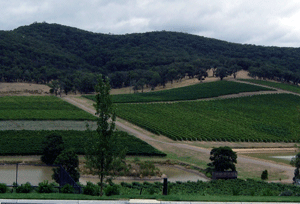 Vineyards in Yarra Valley, Victoria, Australia